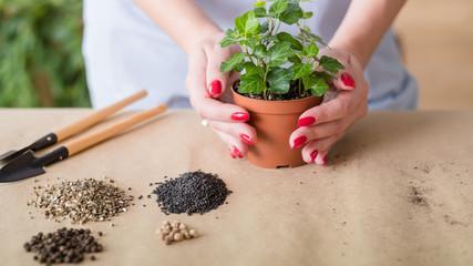 Gardener at work. Indoor gardening hobby. Basic tools set arranged for replanting.