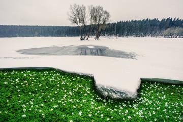 Frühling, Schneeschmelze, Frühjahrsblüher