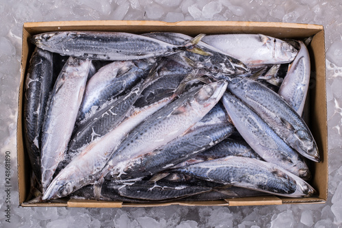 Wholesale Fish Industry to distributor retail seafood import export