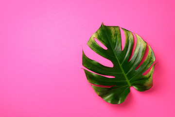 Tropical monstera leaf on pink background. Flat lay, top view. Creative layout. Summer concept