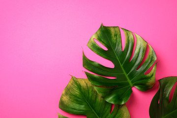 Tropical monstera leaves on pink background. Flat lay, top view. Creative layout. Summer concept