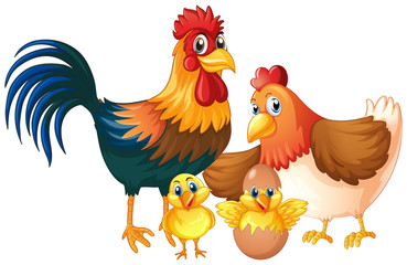 Isolated chicken family on white background