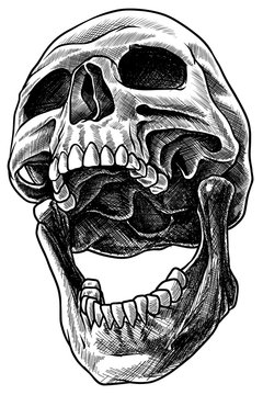 Detailed graphic realistic cool black and white human skull with open mouth. Hand drawn Line art. On white background. Vector icon.