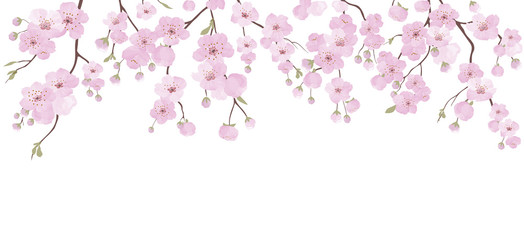 Branch with pink blooming flowers. Sakura flowers background