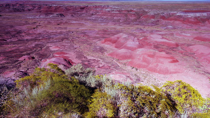 Foto op Plexiglas Candy roze Dawn at Petrified Forest National Park