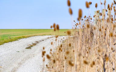 sere teasel plants and field path