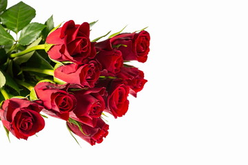 Gorgeous red roses close up view isolated. Beautiful backgrounds. Red Roses backgrounds. Valentine day backgrounds.