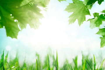 Wall Mural - Green grass with tree leafs over sunny blue sky spring background