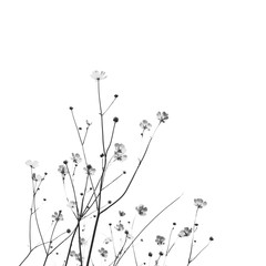 Meadow florets on a white background. Black and white photo