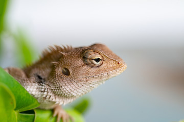 Close up lizard in nature.