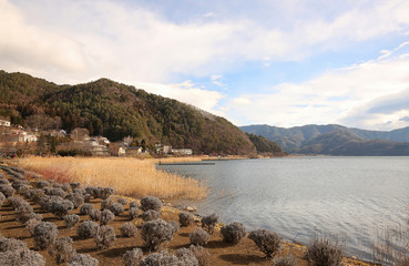 View of Lake Kawaguchi also known as Lake Kawaguchiko and the lavender fields around it.  Lake Kawaguchi is one of Five Lakes around Mount Fuji, located south-west of Tokyo, Japan.