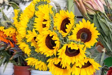 Girasoles en florería