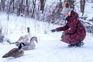 An oriental lady in red coat is playing with swan and ducks in snow