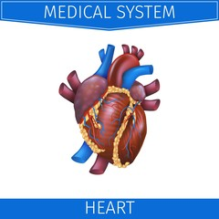 Realistic Vector Illustration Medical System Heart