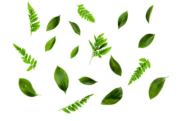 Spring background with young green plants and leaves on white background top view pattern