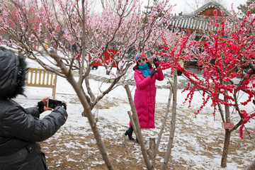 A woman has her picture taken under a tree with fake blossoms in Ditan Park on a snowy day in Beijing