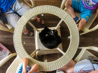 a black stray cat sleeps in an outdoor cafe under a round glass table around which visitors sit waiting for an order