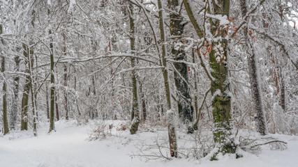 Snow covered forest - Schnee bedeckter Wald