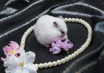 little white dzungarian hamster on a black background with a necklace and flowers of violet