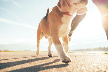 Running dog paws and man legs close up image