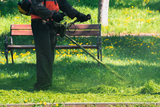 man in coveralls and red jacket with professional brush cutter mowing grass in the park. green lawn with yellow dandelions. bench in the background. sunny springtime weather
