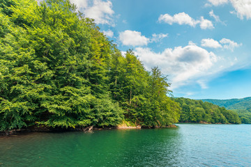 scenic view of beech forest on lake shore. sunny afternoon summer weather with fluffy clouds on the sky. beautiful nature background