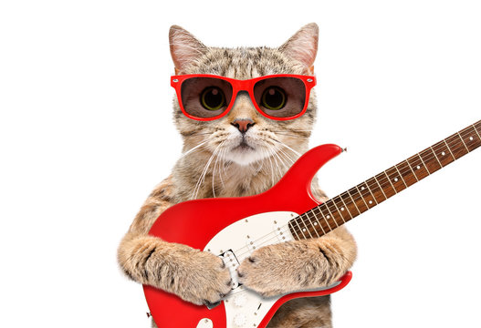Cat Scottish Straight in sunglasses with electric guitar isolated on white background