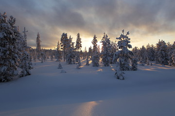 Magic Lapland landscape under the snow and rays of sun, finland