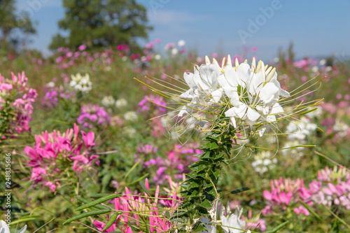 Flower Field Beautiful Of Background Spring Season Flowers Warm Tone