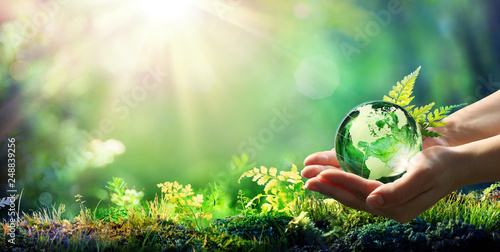 Wall mural Hands Holding Globe Glass In Green Forest - Environment Concept