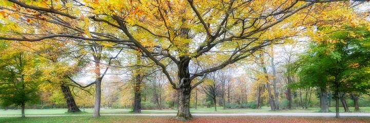 Herbstlaub 945015