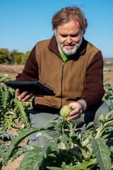 A farmer with a tablet observes an artichoke in his field.