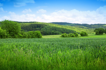 Summer landscape with trees and blue sky. Summer background.