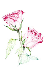 Watercolor painting of red rose bouquet - Illustration.