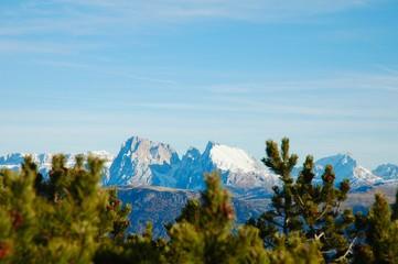 Alberi e Dolomiti, Alto Adige, Italia