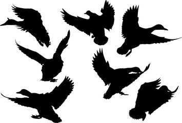 seven flying ducks black silhouettes on white