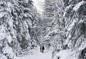 Fototapete - Couple looking at snow covered trees in a forest
