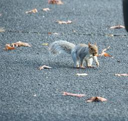 Squirrel in a car park
