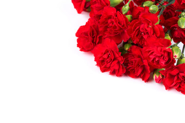 Red carnations on a white background
