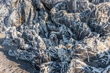 Golden Retriever Hiding in White and Black Rocks