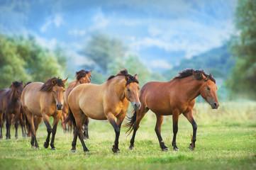 Horse herd run on summer pasture Wall mural