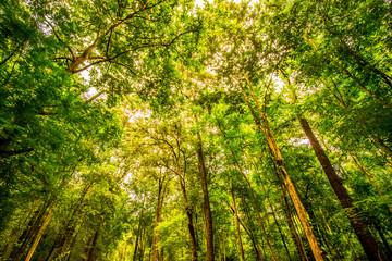 Shade of trees.6