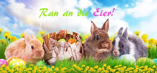 Ran an die Eier Karte mit Hasen