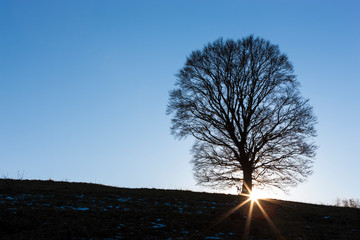 Isolated tree on the Mount Grappa in Italy