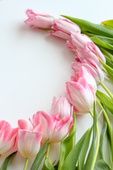 Pink tulips flat lay in a circle on a white background, vertical
