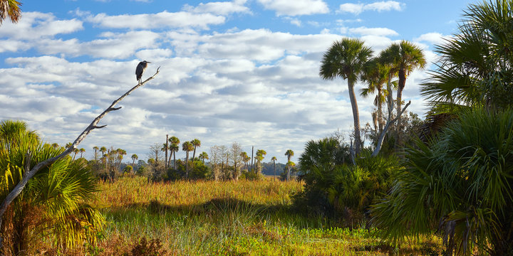Palm trees and bird at Orlando Wetlands Park in Orange County, Florida