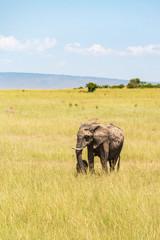 Elephants mother with a newborn calf