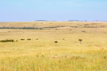 Beautiful african savannah landscape view