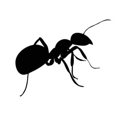 vector isolated, silhouette of insect ant