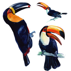 Toucan Tropical Bird Made in watercolor. Wild bird on a white background. Set for design